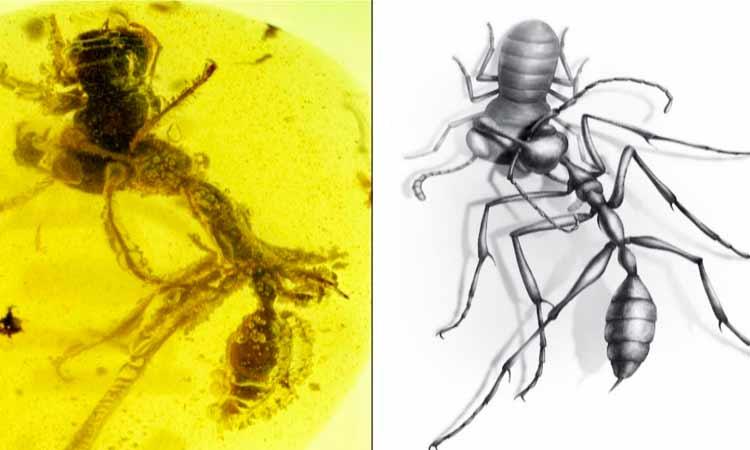 Photo of Descubren fósil de «hormiga asesina»