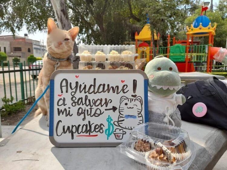 Photo of Este gatito vende cupcakes para pagar su operación
