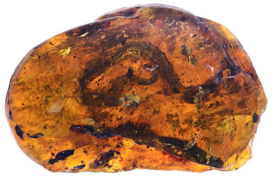 Photo of Hallan en ámbar cría de serpiente de hace 100 millones de años
