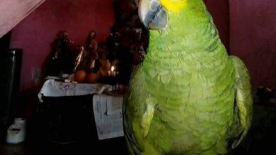 Photo of PIDEN AYUDA PARA ENCONTRAR A «CUCO»