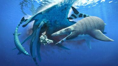 Photo of Identifican un lagarto marino del Cretácico con dientes como los del tiburón