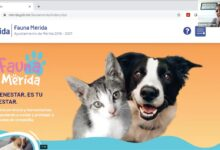 "Photo of ""Fauna Mérida"", web para atender a las mascotas"