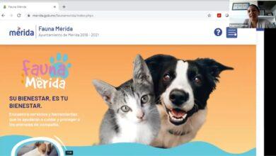"Photo of ""Fauna Mérida"", web para atender a las mascotas"