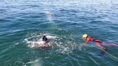 Photo of Marina libera a una ballena atrapada entre mallas