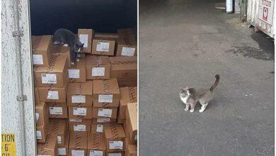 Photo of Gato sobrevive a 3 semanas dentro de contenedor; comió bombones