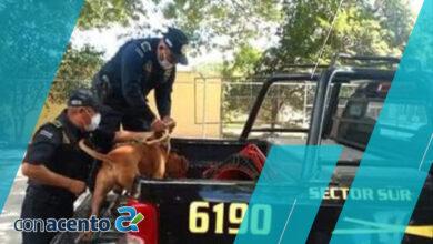Photo of Perro es «encarcelado» por matar a un gato