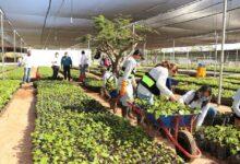 Photo of Comienza distribución de plantas frutales para fortalecer la producción yucateca