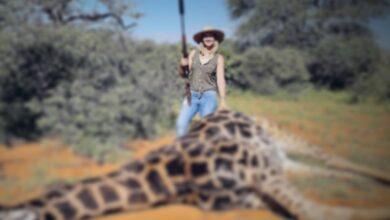 Photo of ¡Indignante! Mujer mata a una jirafa y presume el corazón en redes