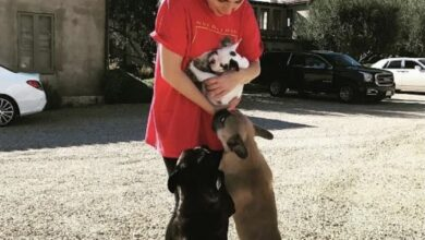 Photo of Secuestran a perros de Lady Gaga; ofrece 500 mil dólares de recompensa