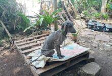 Photo of Arrojan aceite quemado a una perrita en Tizimín