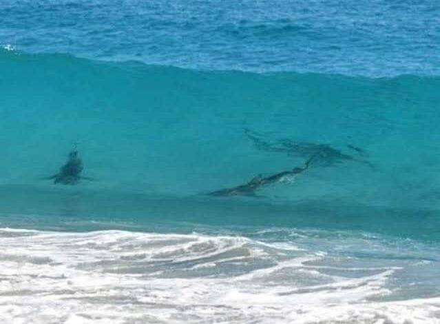 Photo of Prohíben nadar en Xcalacoco, tras avistamiento de tiburones
