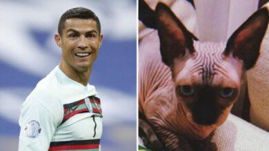 Photo of Atropellan a gato de Cristiano Ronaldo; lo manda en jet privado al veterinario
