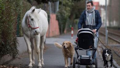 """Photo of """"Jenny"""", la yegua que  pasea sola por Fráncfort"""