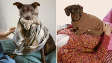 Photo of Zara lanza línea de ropa para mascotas