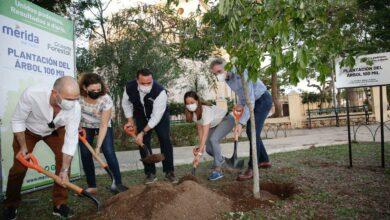 Photo of El Ayuntamiento de Mérida alcanza la meta de sembrar 100 mil árboles en esta administración