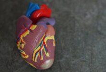 Photo of Covid-19 puede matar células del músculo cardíaco y afectar la contracción del corazón