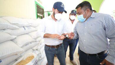 Photo of Distribuyen maíz a más de 224 mil familias en Yucatán