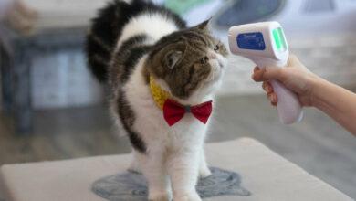 Photo of Zoetis, la vacuna contra covid-19 para proteger a los animales