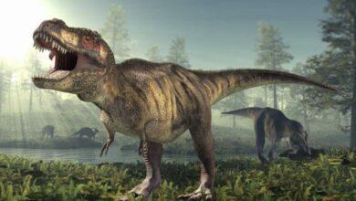 Photo of Unos 2,500 millones de Tiranosaurios rex habitaron el planeta: expertos