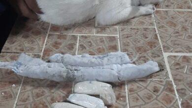 Photo of Atrapan a «narcogato» cuando ingresaba con drogas a una cárcel panameña