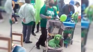 Photo of Denuncian maltrato animal en evento político del Partido Verde en Puebla