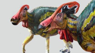 Photo of Paleontólogos mexicanos identifican una nueva especie de dinosaurio: Tlatolophus galorum
