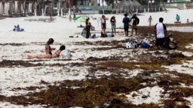 Photo of Sargazo se cuadriplica y amenaza con inundar al Caribe mexicano