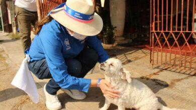 Photo of Abril Ferreyro comprometida con el cuidado a las mascotas