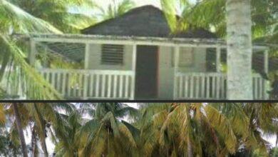 Photo of Demuelen cabaña emblemática en Dzilam de Bravo; acusan a exalcalde