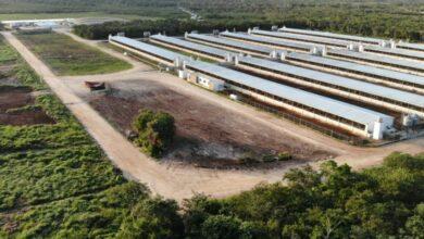Photo of Ordenan suspensión total de granja porcícola en Chapab