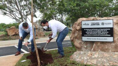 Photo of Superan meta de arborización al plantar 216,603 árboles en Mérida