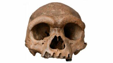 Photo of Cráneo de Harbin es una nueva especie humana, ¿la más cercana a nosotros?