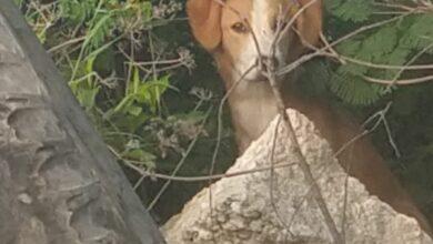 Photo of Es captado al momento que abandona a un perrito en Ciudad Caucel