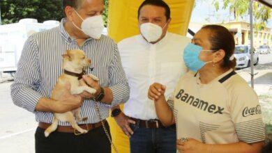 Photo of Cuidado y bienestar animal, responsabilidad entre Ayuntamiento y ciudadanos en Mérida