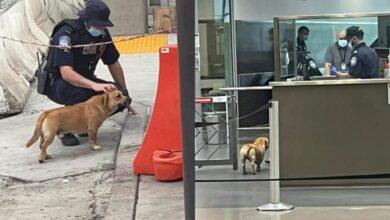 Photo of Perrito se vuelve internacional al cruzar frontera de México y EU