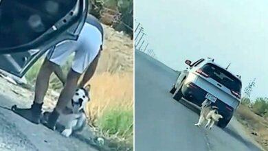 Photo of Detienen a dueño de perrito por abandono en carretera de Texas