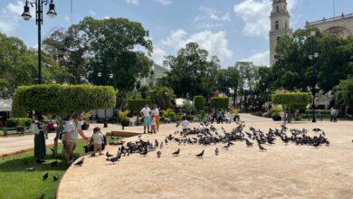 Photo of Invita IMSS Yucatán a no bajar la guardia contra el COVID-19