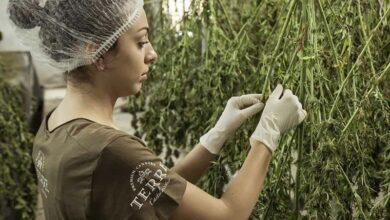 Photo of Colombia autoriza uso industrial del cannabis y su exportación