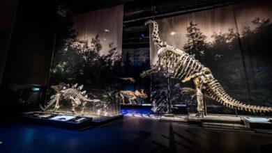 Photo of Rayos X muestran cómo respiraba un dinosaurio