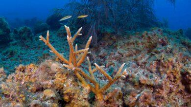 Photo of En Yucatán científicos exploran arrecifes para documentar el daño que presentan
