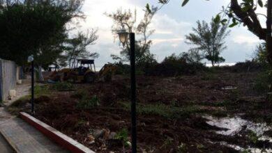 Photo of Ecocidio en Isla Mujeres: talan más de 1000 metros cuadrados de mangle