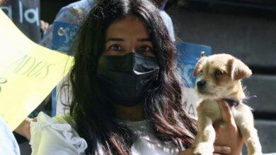 Photo of Lanzan CURP para registrar mascotas en la CDMX