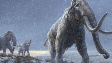 Photo of Los mamuts a la Tierra en 6 años: científicos de Harvard