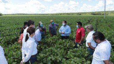 Photo of Con apoyos del Gobierno de Yucatán, se ha logrado recuperar casi siete mil 500 hectáreas de soya